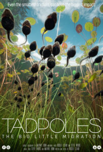 Tadpoles: The Big Little Migration<p>(Canada)
